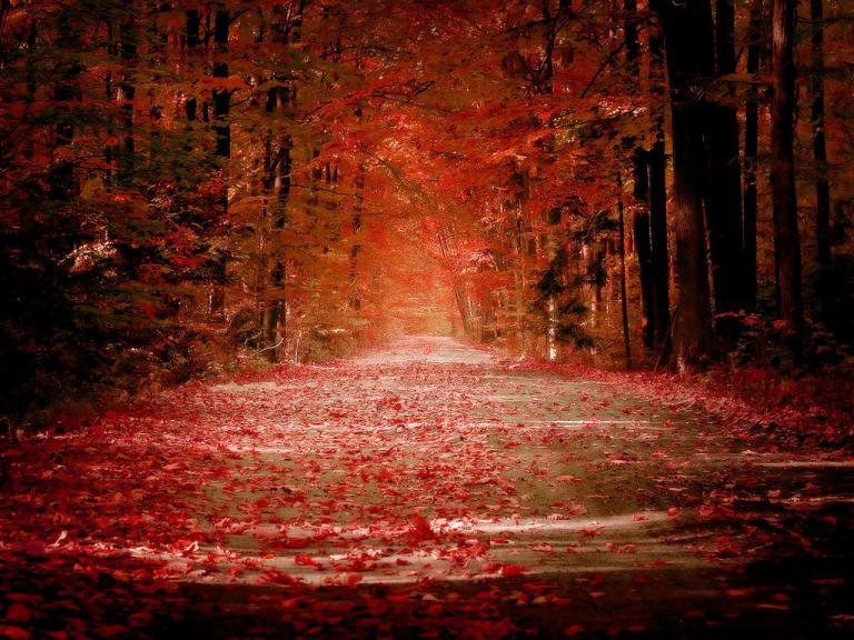 Название: Autumn_by_sican.jpg Просмотров: 287  Размер: 98.5 Кб