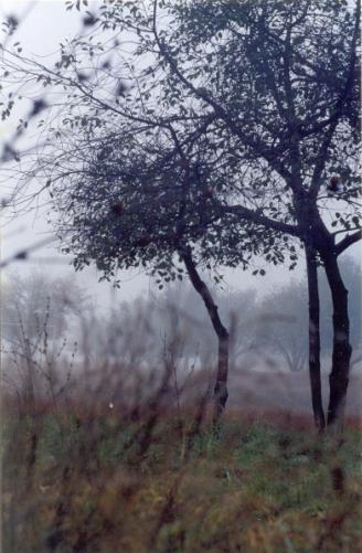 Название: Tree Mis.JPG Просмотров: 859  Размер: 35.6 Кб